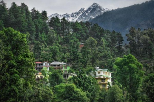 Homes and guesthouses are nestled between the forest and below the Himalayas in McLeod Ganj, India