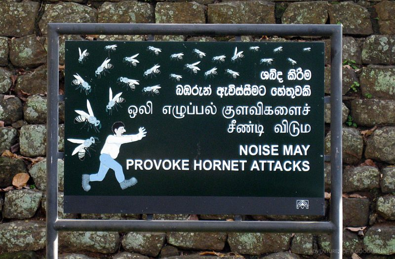 Hornets at Sigiriya
