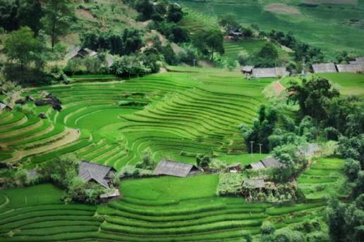Circular rice paddies in Sapa, Vietnam