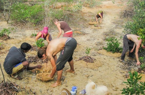 Manual labor at Sadhana Forest, Auroville, India