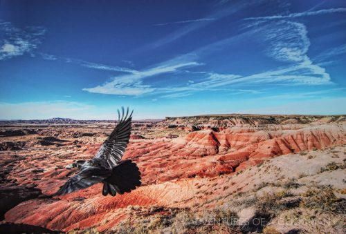 A bird soars above the Painted Desert, located in Petrified Forest National Park, Navajo, Arizona