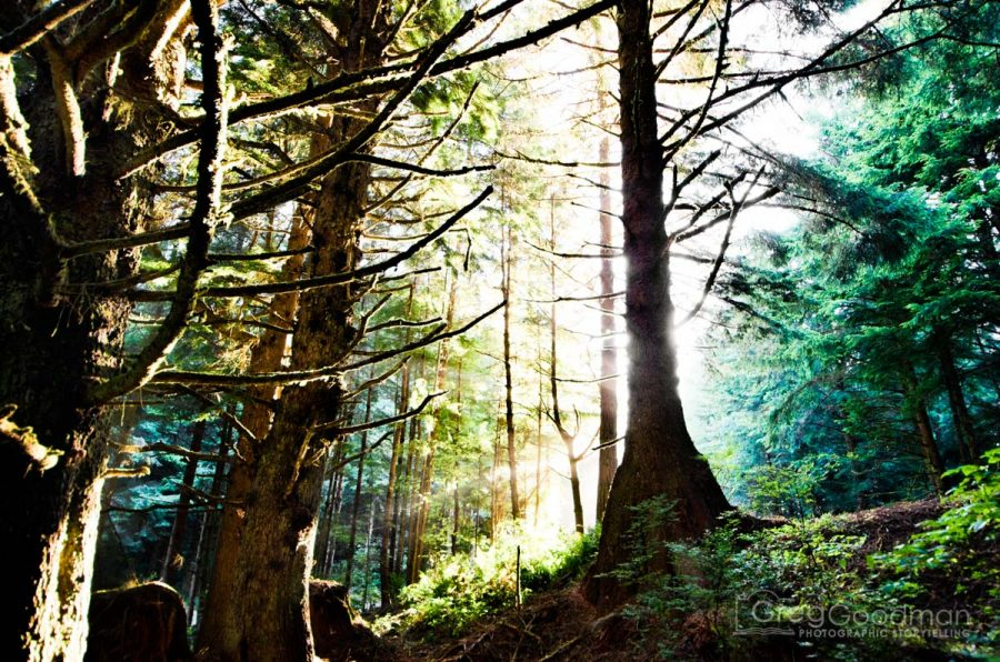 Sunrise behind a forest near the Umpqua River Lighthouse in Oregon on Highway 101