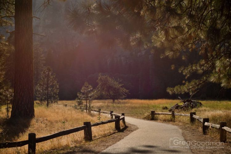 Paved paths offer visitors a gentle way to stroll through Yosemite Valley