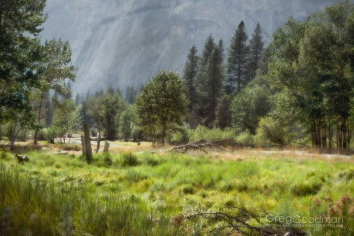 The western part of Yosemite Valley is full of wide-open fields, trees and granite