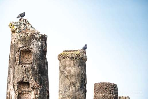 Birds love making nests atop the ancient columns in Sukhothai
